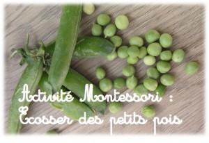 Activité Montessori enfant Ecosser des petits pois