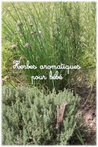 Herbes aromatiques pour bébé