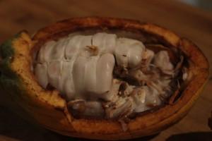 Fèves de cacao pour bébé